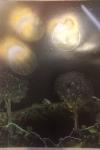 Golden Moons